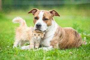 Das Mietrecht macht zur Hundehaltung keine Angaben.